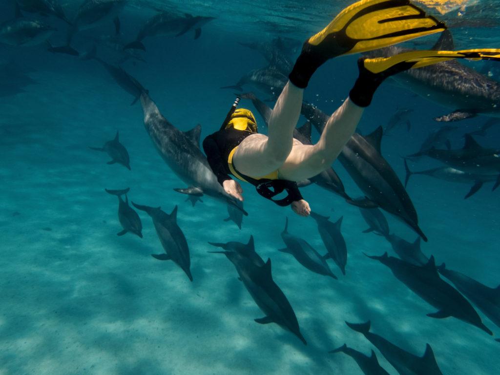 zwemmen met dolfijnen egypte