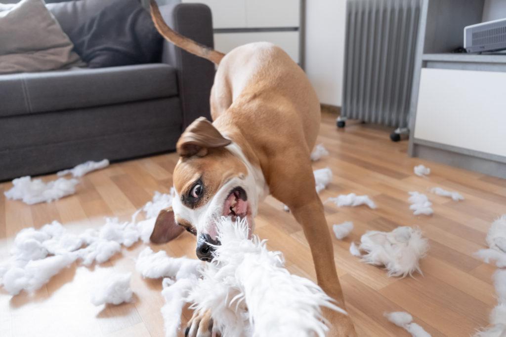 schade hond of kat: aansprakelijkheid