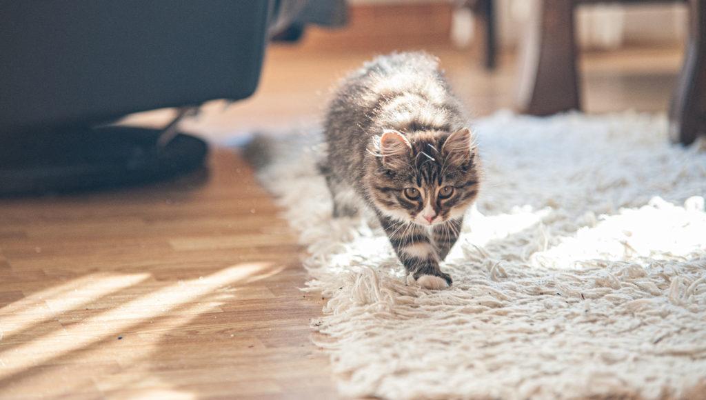 gekke 5 minuten kat jacht