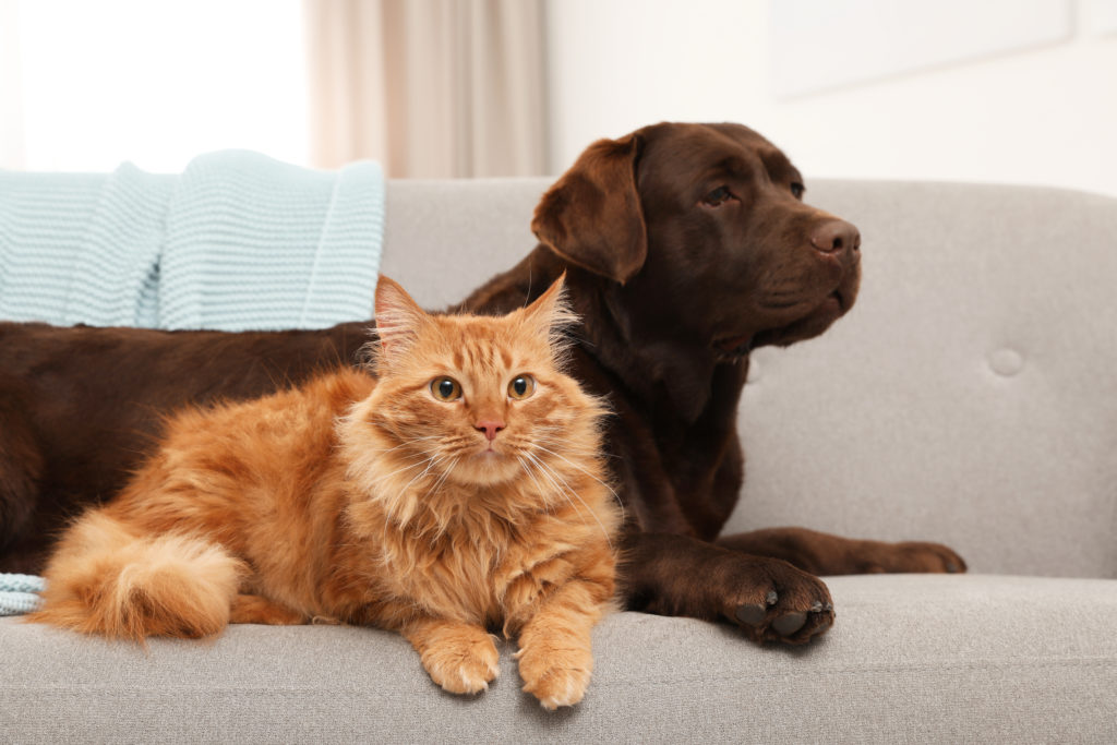kattenziekte hond
