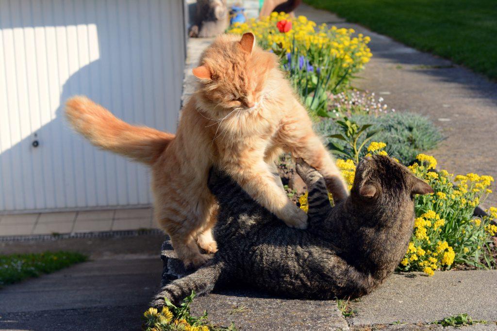 FIV kat kattenaids