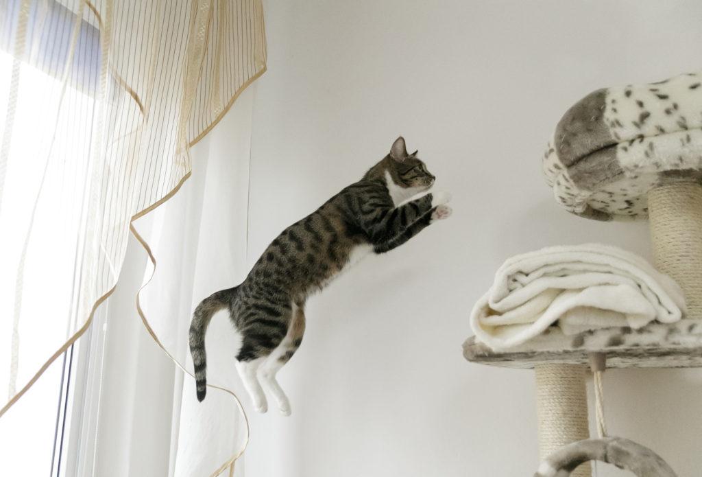 gekke 5 minuten kat springen