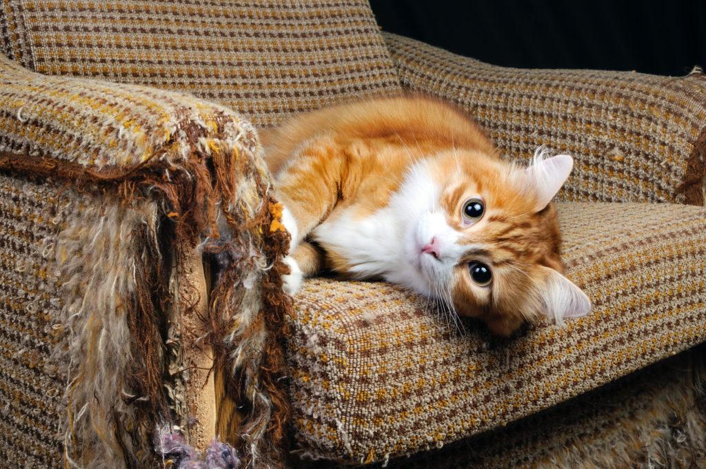 schade hond of kat: inboedel