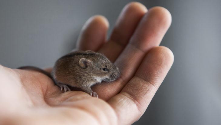 Muis handtam maken: stappenplan