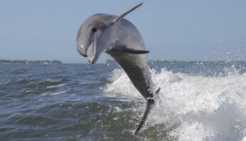 dolfijntoerisme vakantie
