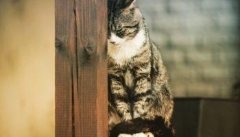 FIV / kattenaids