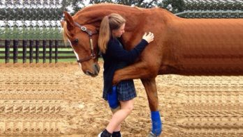 Trouwe paarden gek op hun verzorger