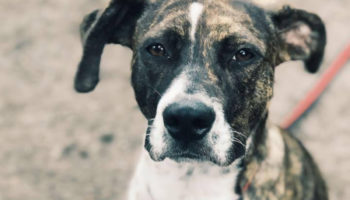 soraya hond asiel nieuw thuis