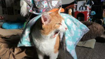 Kat is gek op zijn dekentje