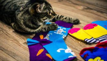verzameldrang kat sokken