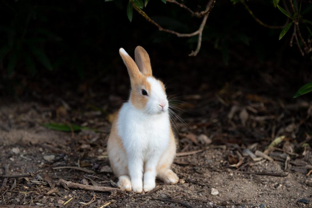 konijnentaal: besnuffelen