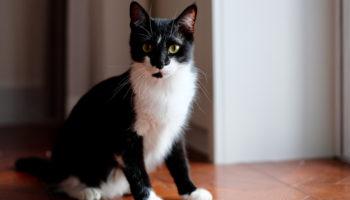 kat zindelijk maken