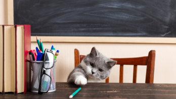 Waarom verzamelen katten zo graag?