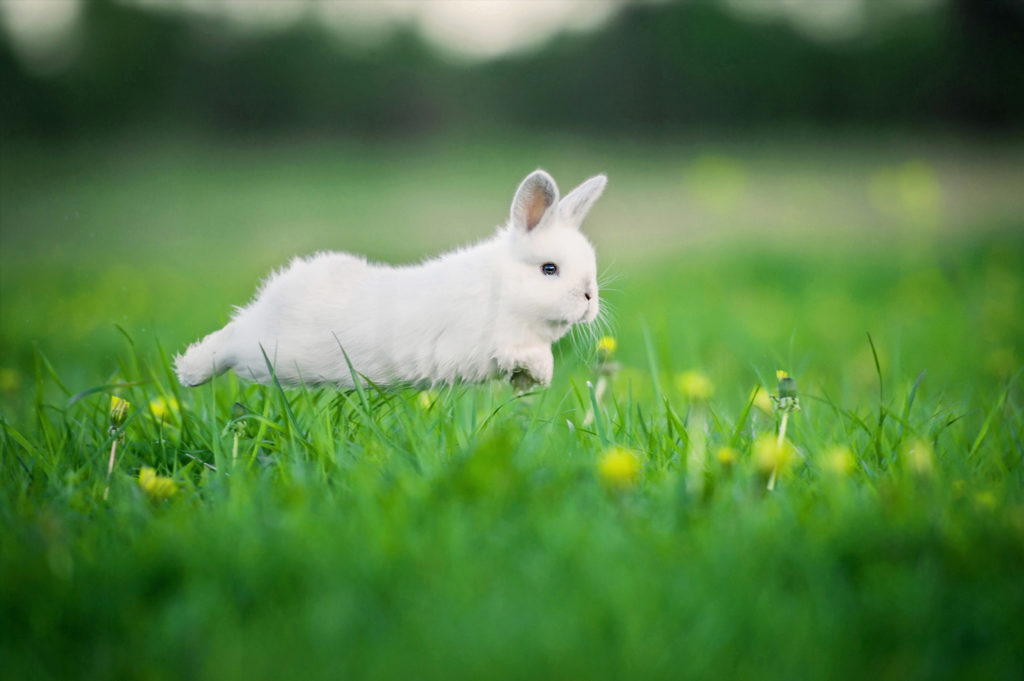 konijnentaal vertaald