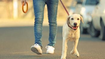 Hond uit asiel een goed idee?