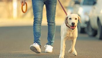 hond uit asiel
