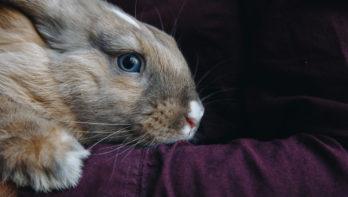 Woordenboek der konijnentaal