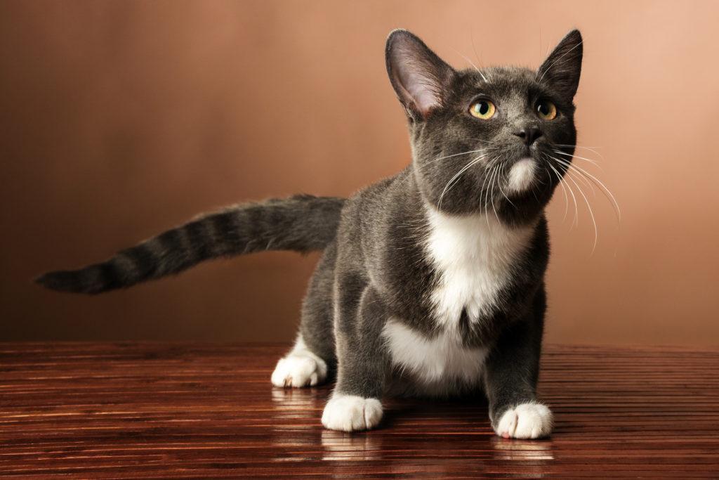 kat zindelijk kitten