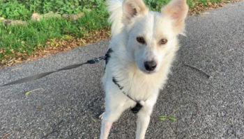 Thomas hond asiel verhuis