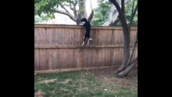 Atletisch hond