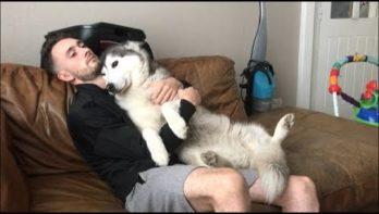 Husky wil maar één ding