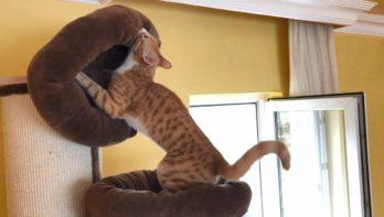 Kat gaat voor de allerzachtste slaapplaats