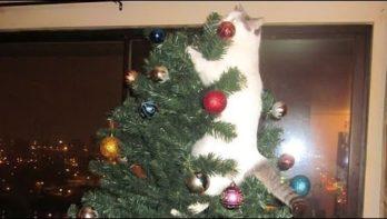 Katten en kerstbomen