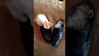 Kittens kiezen nieuwe slaapplek uit