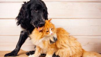 Acana en Orijen doneren feestmaaltijden aan asielhonden en -katten!