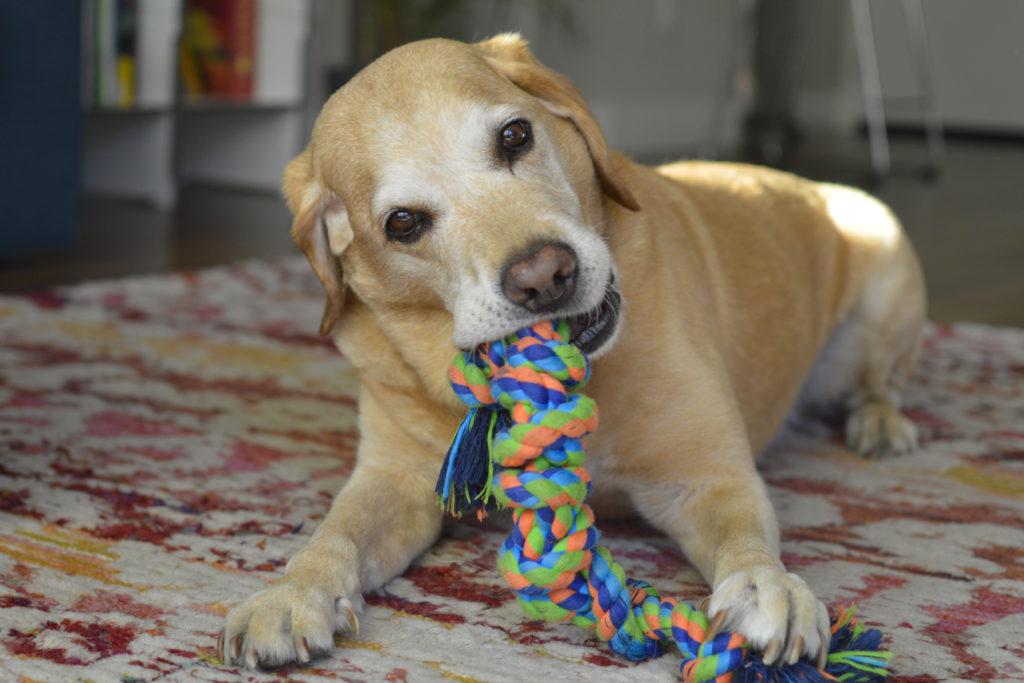 hond oud en nieuw afleidden