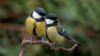 De Nationale Tuinvogeltelling komt er weer aan!