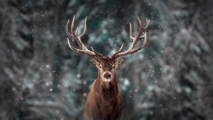 Zo blijven dieren warm tijdens de winter