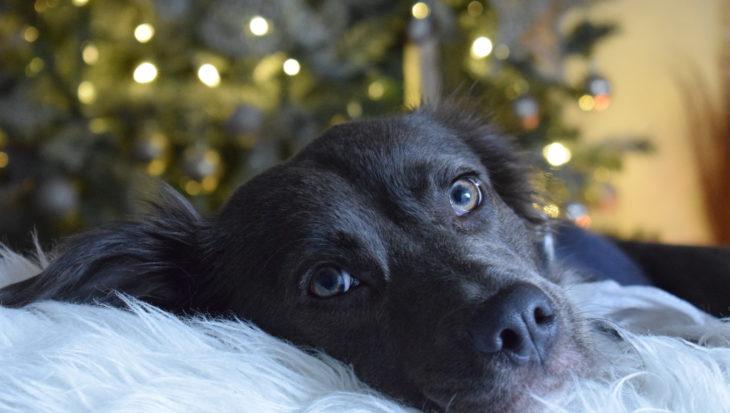 Geef je hond een rustig Oud en Nieuw