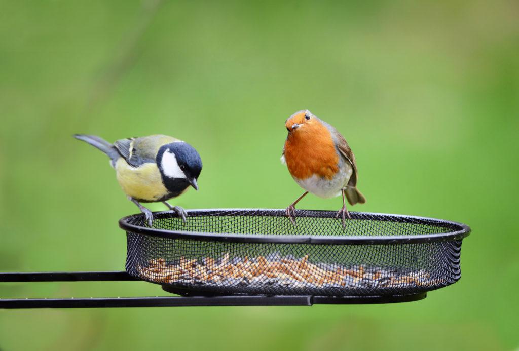 tuinvogeltelling:voeren