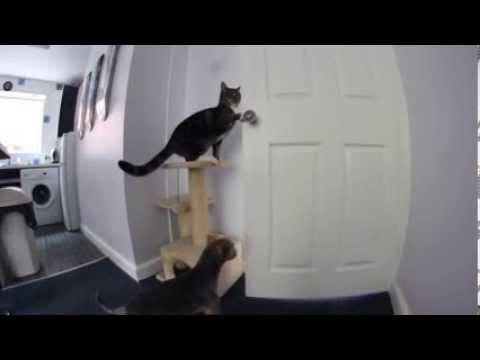 Teamwork hond en kat