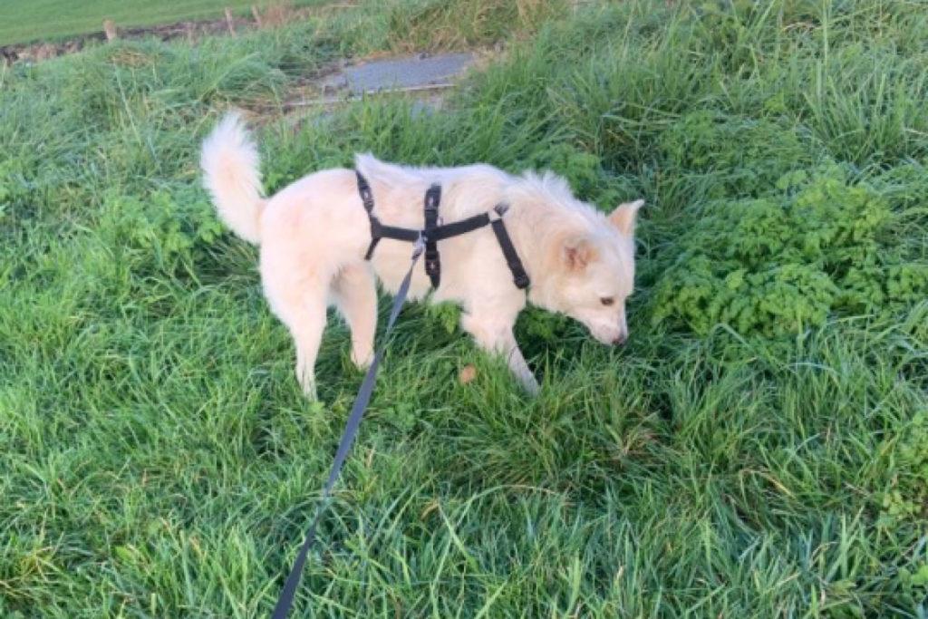 thomas herplaatser hond 1
