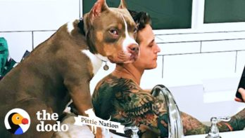 Video - Hond doet zijn ouders na