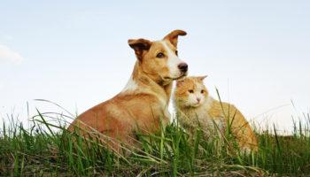 popolaire kattennamen en hondennamen