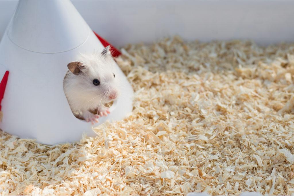 hamster vervoeren