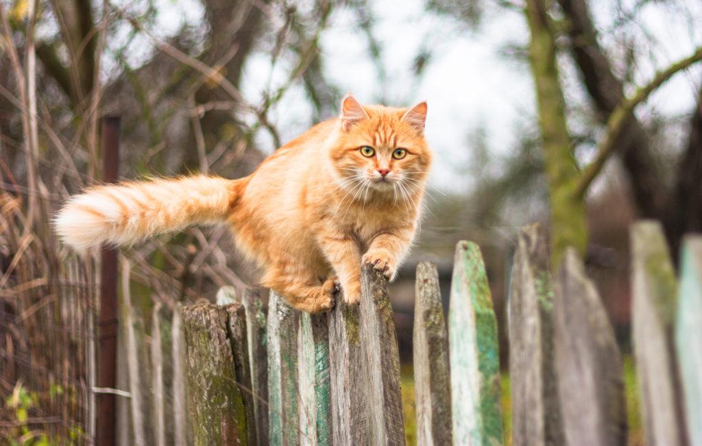 kat in huis naar buiten