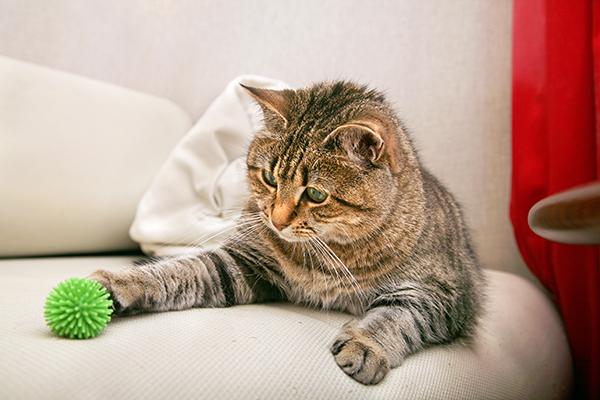 dementie bij kat