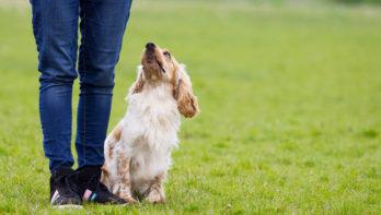 Doggy dance voor beginners