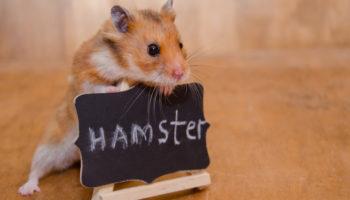 hamster verzorgen