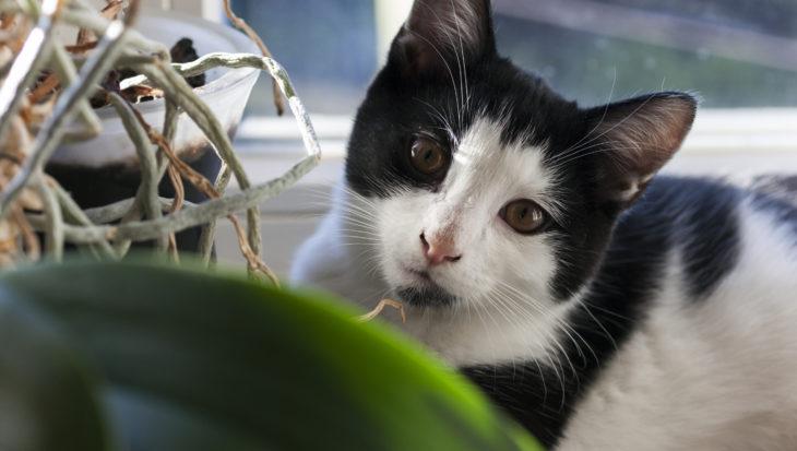 Een kat adopteren: hier moet je rekening mee houden