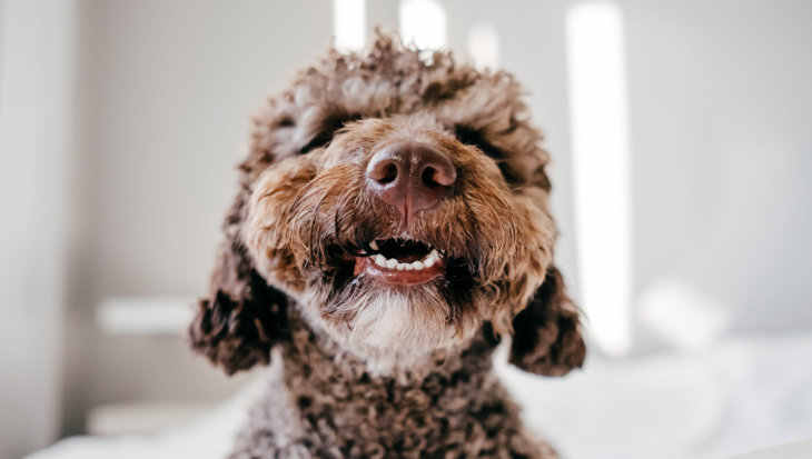 Gebitsverzorging honden