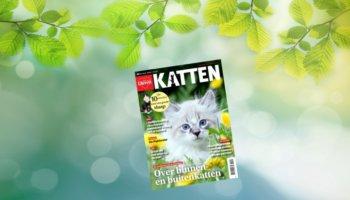 dieren magazine katten