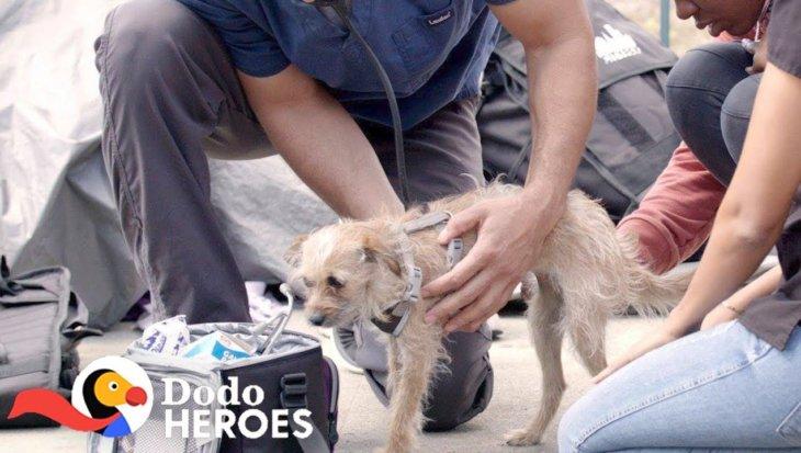Dierenarts zet zich in voor dieren van daklozen