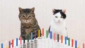 Katten en domino
