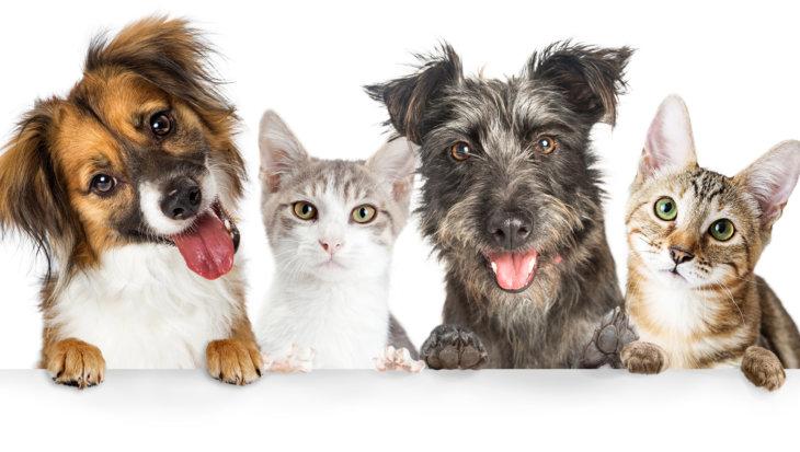 Faculteit Diergeneeskunde geeft antwoord op vragen over huisdieren en corona
