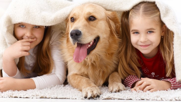 Binnenspeeltips honden